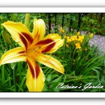 Daylily Bonanza and Knickknack