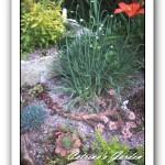 veronica teucrium trehane, Allium glaucum, Elizabeth sedum spurium, Angelina sedum repestre, sempervivum old copper, blue mounded dianthus