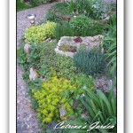 Sedum Angelina, Dragon's blood, packerland, curly chives and rough with semps